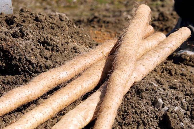 恵那の自然薯