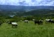 恵那の酪農 牧場
