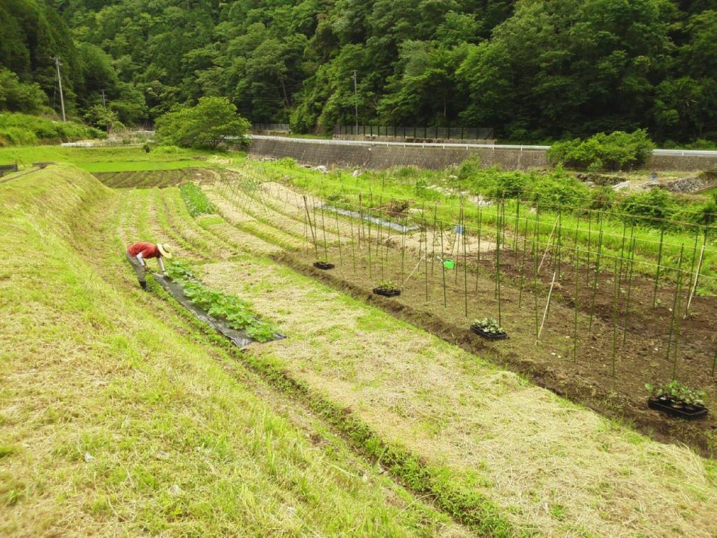 Farm rootsの畑