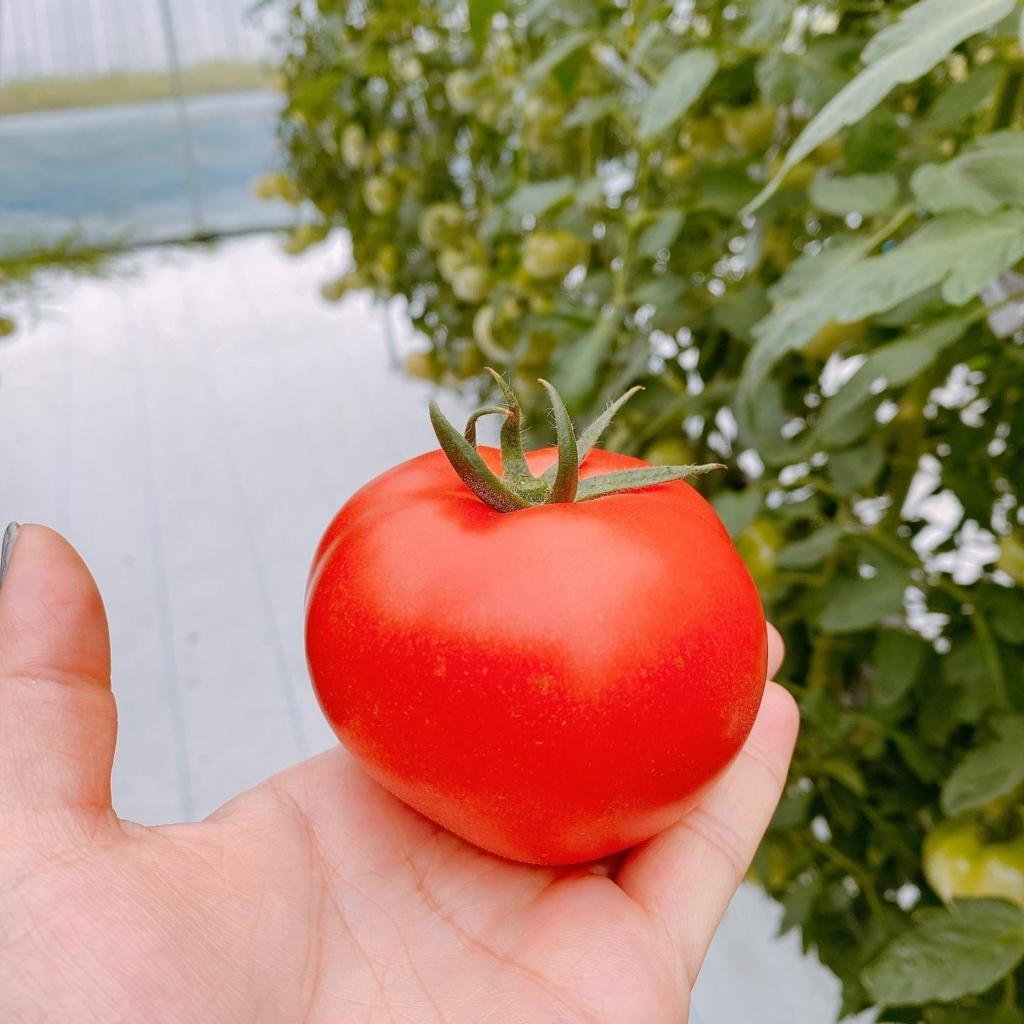 7月3日、夏野菜いっぱいの、たべとるマルシェ開催します_記事サムネイル